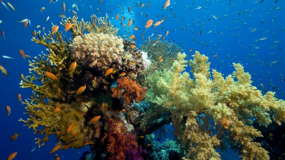 Größtes Korallenriff