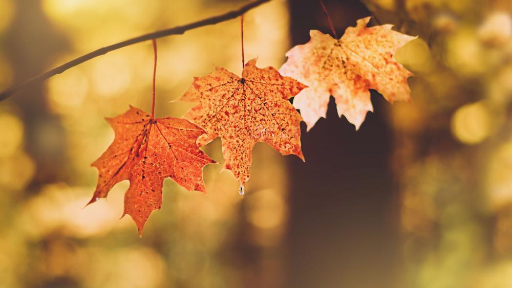 Novemberausklang-mit-strahlendem-Sonnenschein
