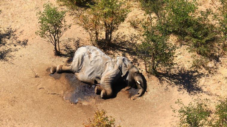 Elefantensterben Ursache